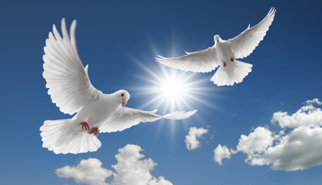 two doves flying with spread wings on sky