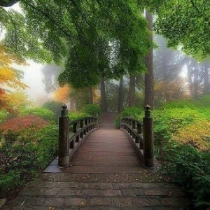 forest-bridge